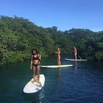 Enjoy paddleboarding in a magical cenote with mangrove