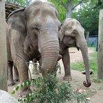 Asian elephant habitat