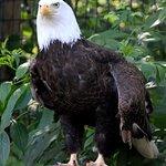 Eagle and vulture habitat