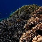 Aquarium south