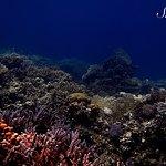 Aquarium South 2