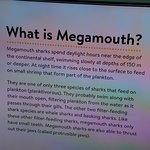 What is megamouth?