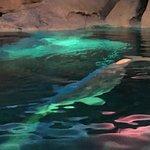 Photo of SeaWorld Orlando