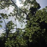 Δημοτικός Κήπος Φωτογραφία