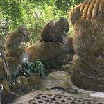 Sacred Monkey Forest Sanctuary Φωτογραφία