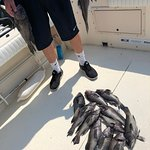 Sea Bass Fishing Trip