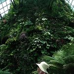Photo of Cloud Forest