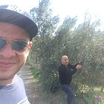 Today we were out harvesting fresh local olives for our restaurant .