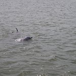 A family of dolphins came right up to the boat!