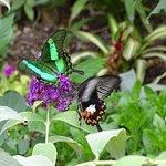 una delle tantissime farfalle ..................................................................