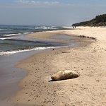 Bilde fra Niechorze Beach