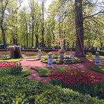 Буйство тюльпанов в Петергофе