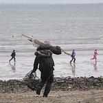 seashore foraging courses in dorset