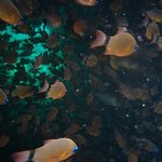 Beautiful shoals of fish