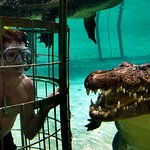 A Wild Animal Volunteer taking part in a thrilling and breathtaking crocodile cage diving.
