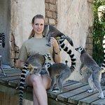 Even Lemurs can spot a pretty lady! :-)