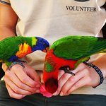 Volunteer bonding with feathered friends