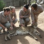 Working up close and personal with some of the worlds most amazing large cats