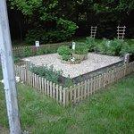 ogródek z ziołami