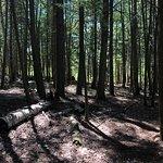 Bilde fra Hardy Lake Provincial Park