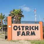 Aruba Ostrich Farm Foto