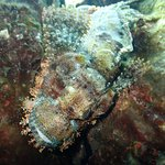 A close-up of the scorpionfish. The guide borrowed my camera and got this shot for me.