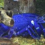 Zdjęcie Toba Aquarium