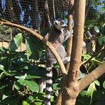 Photo of Bristol Zoo Gardens