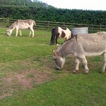 Donkeys near wooded area