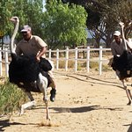 Photo of Highgate Ostrich Show Farm