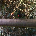 Birds of Eden Φωτογραφία