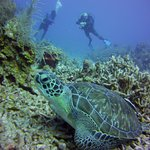 If you don't see turtles, you diving with your eyes closed