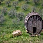 Azienda Agricola Altiero照片