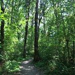 Foto di Tualatin Hills Nature Park