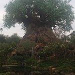 Foto de Disney's Animal Kingdom