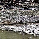 Foto de Kuching Wetlands National Park