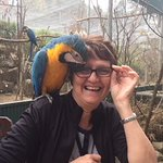 The birds in the aviaries will steal your glasses, earrings, buttons, or anything they can get