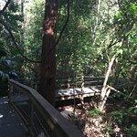 Foto de Sea Acres Rainforest Centre Port Macquarie