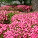 ツツジが咲いていてお庭もきれいでした。利用者のみ見れます。