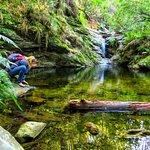 Foto de Wilderness National Park