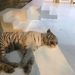White Tiger, it doesn't look well