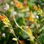 plus de 1500 variétés de plantes exotiques, tropicales et potagères.