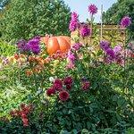Les bonnes associations du potager: légumes et fleurs