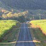 Drive through the Sugar Cane Fields