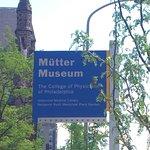 Bild från Mutter Museum