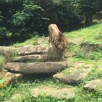 Singapore Zoo Φωτογραφία