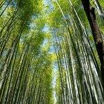 ภาพถ่ายของ Bamboo Forest Street