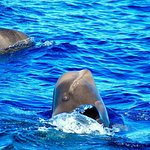 Spy hope: es cuando la ballena se pone vertical y saca solamente la cabeza del agua