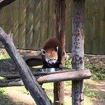 Zoo Sosto Φωτογραφία