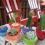 Colección de Cactus.